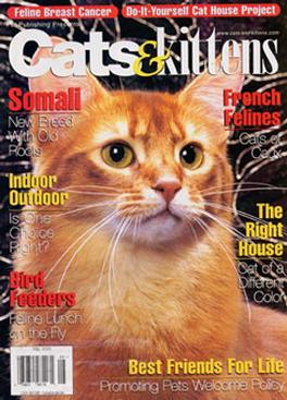 Cats & Kittens Magazine Subscription